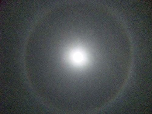 100131_0008091ちびKからもらった「月輪」