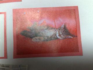 猫の写真切り抜きアップ