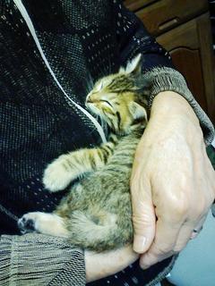 20080605母の腕の中で眠るマタムネ