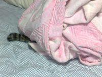 私のベッドの上にて。頭かくして尻隠さず。