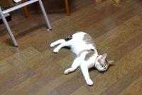 6月のライヤ7(う~・・なんて床は気持ちイイの~)