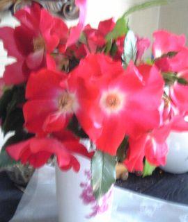 20080518バラを摘んで花瓶へ