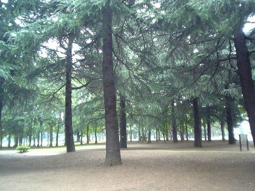 朝の野川公園