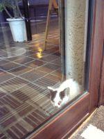 20070818生まれたての仔猫