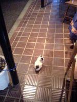 あえてトリミングしなかったのは仔猫の大きさを知らせたかったから。