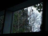 20090301窓の外はこういう感じ