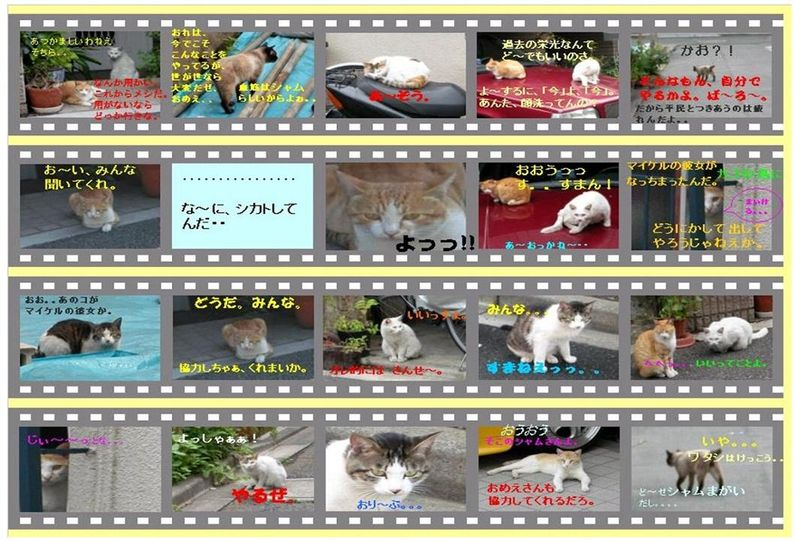 Sho-in-cats story 2008